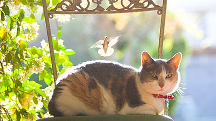 Honey and Birthday, the cat