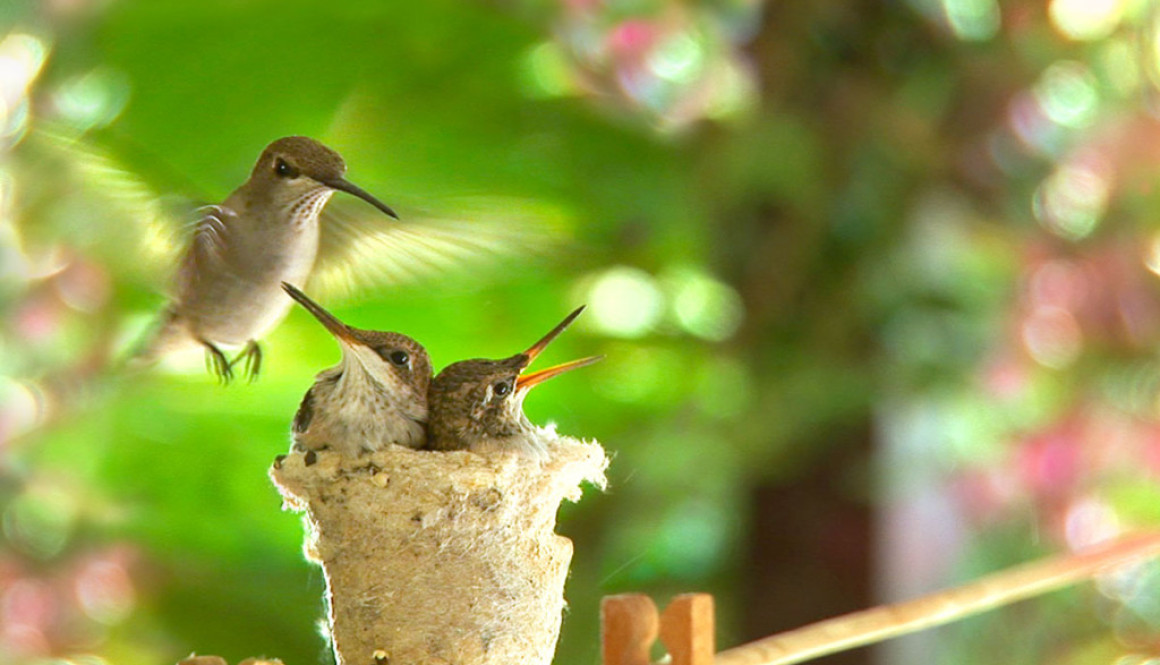 First Flight A Mother Hummingbird's Story Movie Stills