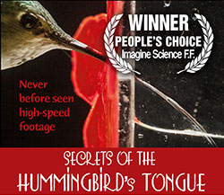 Secrets of the Hummingbird